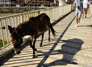 Redensarten Eselsbrücken
