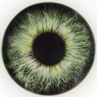 grüne Augen Typ