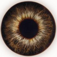 braune Augen Typ