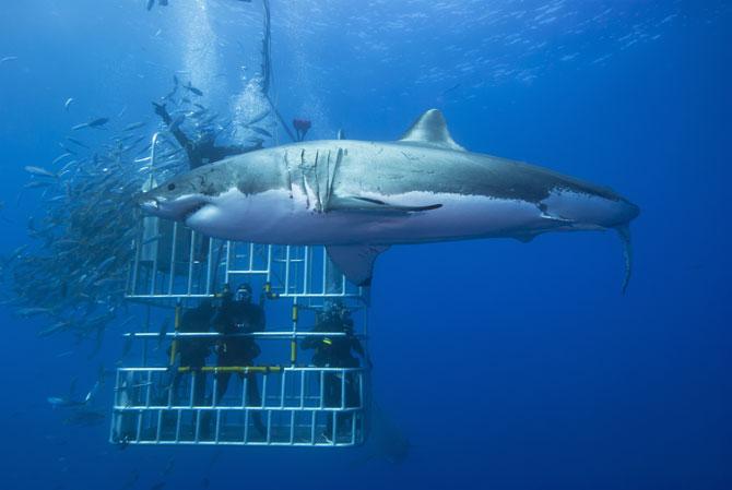 Hai-Tauchen