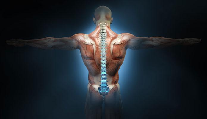 Unteren Rücken trainieren